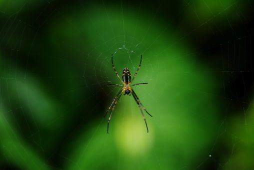 蜘蛛の腹 – Front of Spider