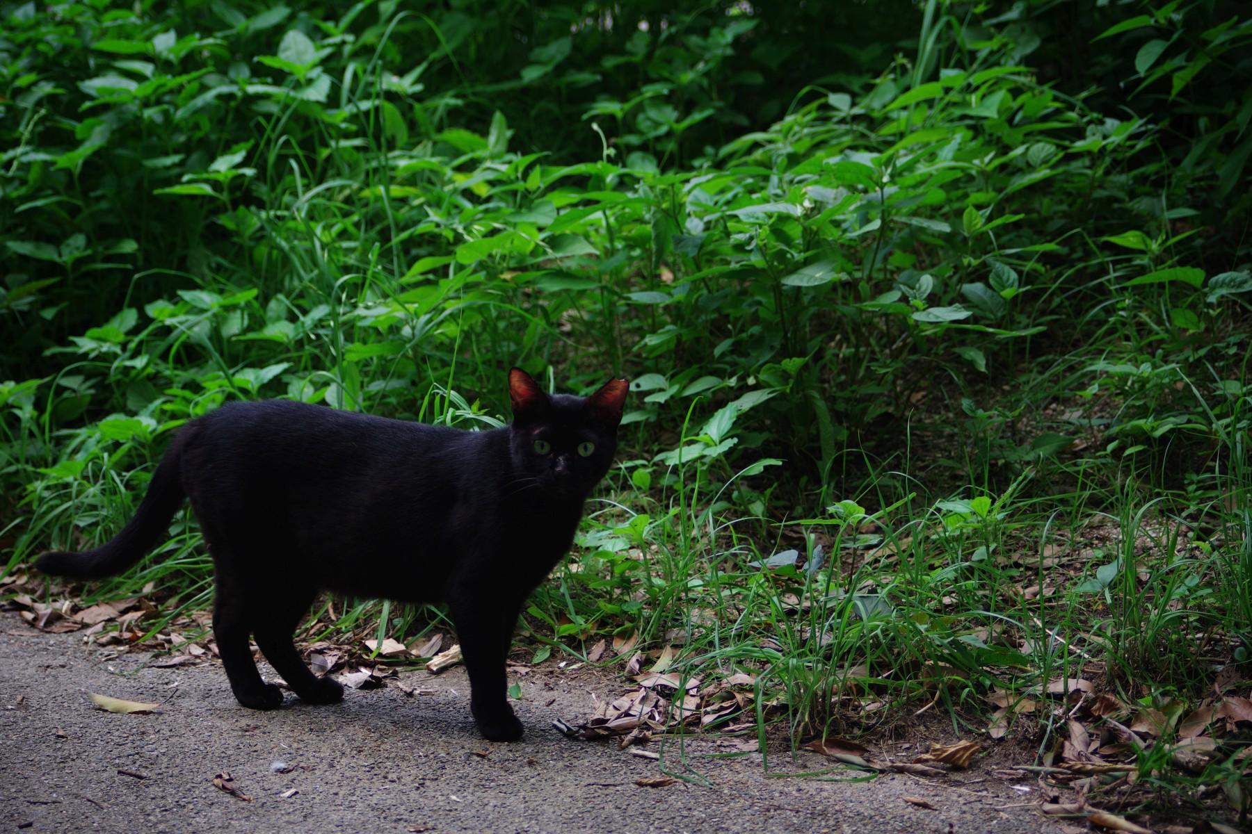 黒猫 – Black cat