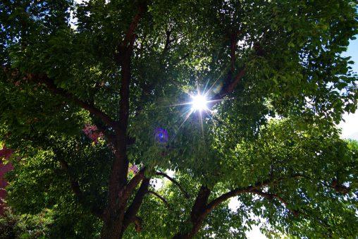 木漏れ日 – Sunbeam