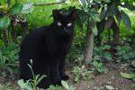 黒 – Black cat