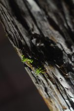 芽吹き – Sprouting