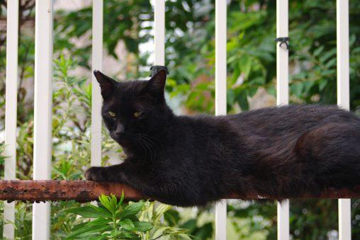 黒いの – Black cat