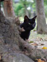 なつかない黒猫(3枚) – Black cat (3 pics)