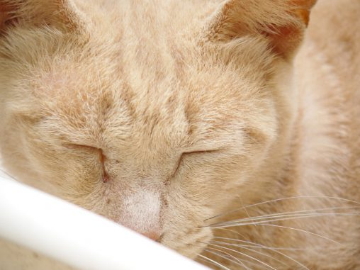 ワイルドな野良(3枚) – Wild stray cats (3 pics)