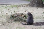掃き溜めに猫 – Sitting cat